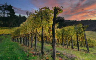 Ballade viticole au cœur des vignes du Jurançon