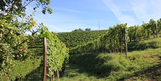 La viticulture biodynamique